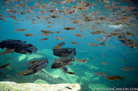 Photos In Cancun - Underwater - Rock The Frock